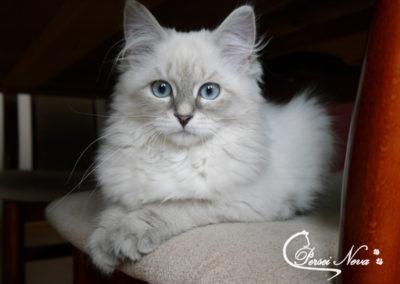 Zdjęcie dowodowe Beatrix :)
