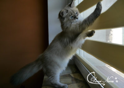 I have catch a fly!