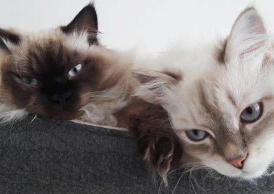Akira & Bianka Persei*PL